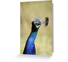 Curious peacock - Wiltshire, England Greeting Card