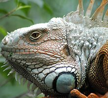 Close to the Iguana by Donna Adamski