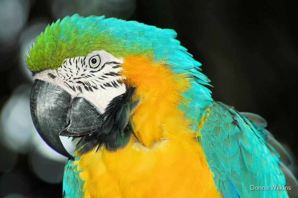 Macaw by Donna Adamski