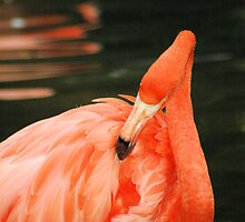 Pink Flamingo by Donna Adamski