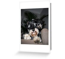 Ty and Coco Greeting Card