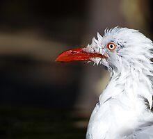 Seagull by Brett Still