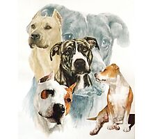 American Staffordshire Terrier /Ghost Photographic Print