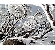 Snowgums 3 Photographic Print