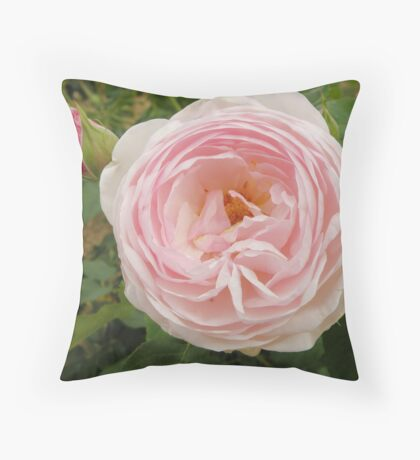 David Austin Rose Throw Pillow