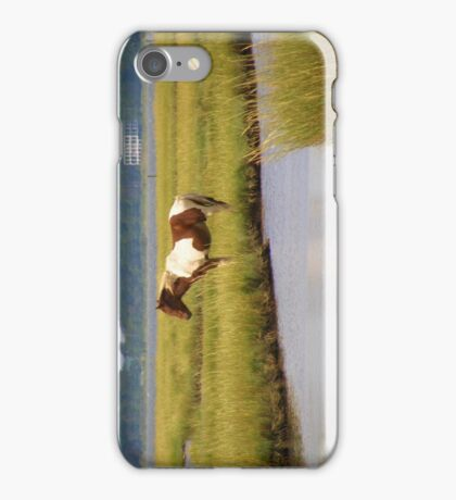 Wild Pony in the Marsh on Assateague Island MD iPhone Case/Skin