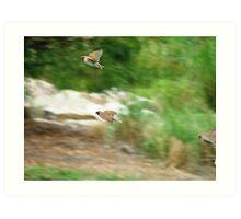 Wrens in flight Art Print