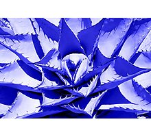 Blue Cactus Photographic Print