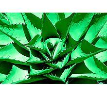 Green Cactus Photographic Print
