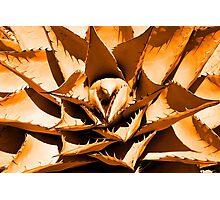 Orange Cactus Photographic Print
