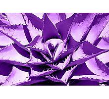 Purple Cactus Photographic Print