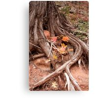Strong roots, a good thing to have Canvas Print