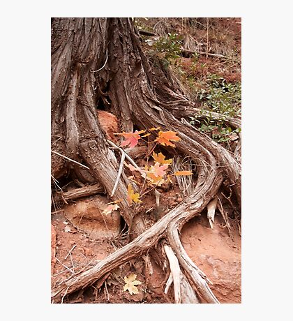 Strong roots, a good thing to have Photographic Print