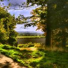View Through The Trees by Angela Harburn