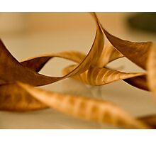Spent Pods II Photographic Print