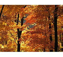 Flaming Autumn Forest Photographic Print