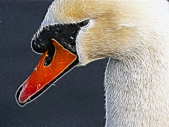 Swan by Trevor Kersley