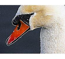Swan Photographic Print