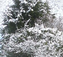 Snow Scene by Eugene Francis Cummings