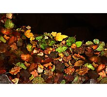 Floating Fall Colors Photographic Print