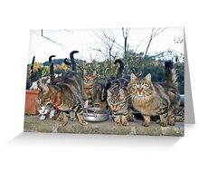 Tails UP!! Greeting Card