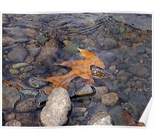 Leaf in Water Poster