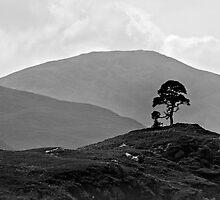 Glen Strathfarrar - Majestic In Silhouette by Kevin Skinner