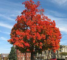 Bright Tree by Stormoak Lonewind