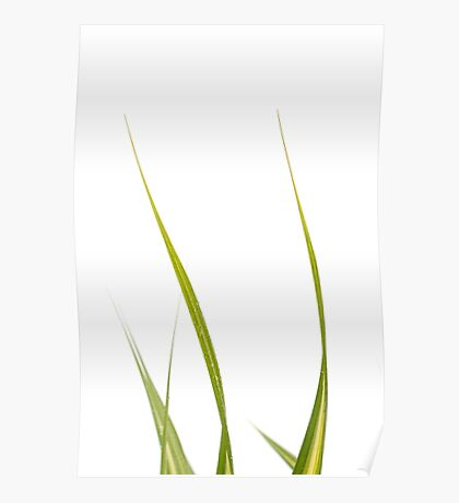 Blades of Grass #2 Poster