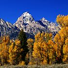 Panorama -  Grand Teton with autumn golden aspens by cascoly