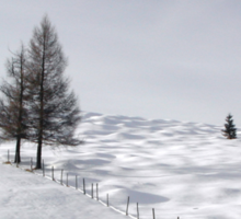 Winter Meadows Sticker