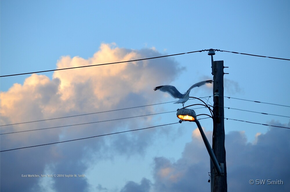 Larus Delawarensis - Ring-Billed Gull On The Street Light | East Moriches, New York by © Sophie W. Smith