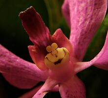 what the???? (A Smiley Queen of the Orchids) by Loreto Bautista Jr.