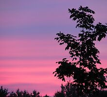 Maple Against Pink by Tammy F