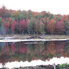 Autumn Swamp  by Tammy F