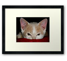 Wild Bill Hickock Kitten claiming a comfy spot Framed Print