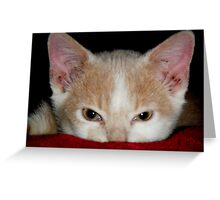 Wild Bill Hickock Kitten claiming a comfy spot Greeting Card