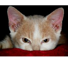Wild Bill Hickock Kitten claiming a comfy spot Photographic Print