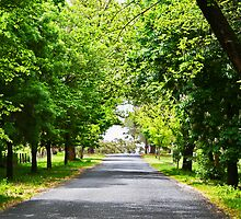 Hill End Country Road by Evita
