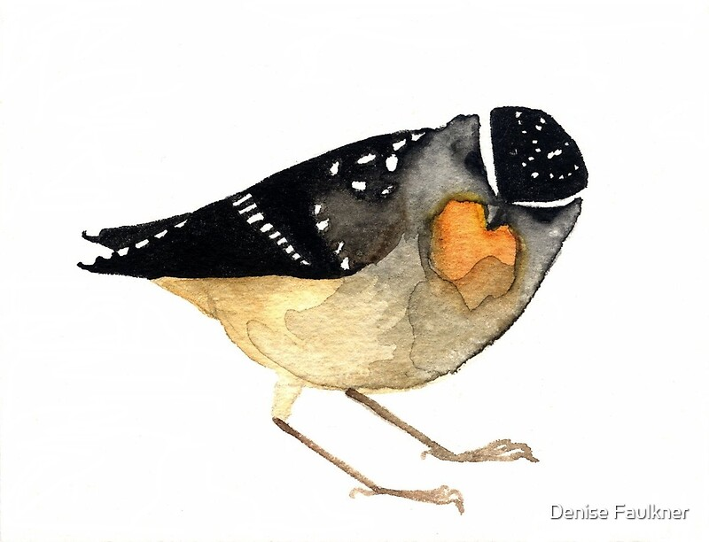 Spotted Pardalote By Denise Faulkner Redbubble