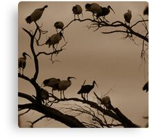 Night Roost Canvas Print