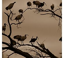 Night Roost Photographic Print