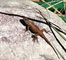 Lizard on a Rock by Kimberly Miller