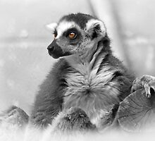 The Lemur King by Sue  Cullumber