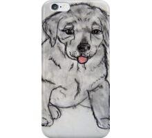Puppy, Lab, Dog, Animal iPhone Case/Skin