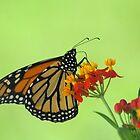 Monarch in Green by Donna Adamski