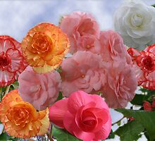 Begonias by Hazelk