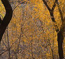 Autumn Lace by bluerabbit