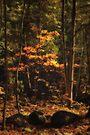 autumn spot by Aimelle