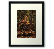 autumn spot Framed Print